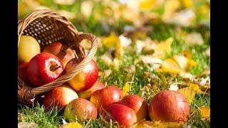 Яблочный Спас Приметы и обычаи