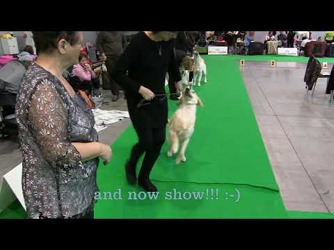 Prague expo dog 2017  - Il Cuore di Vera