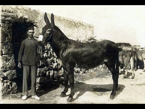 365 fotos antiguas de Menorca para la historia