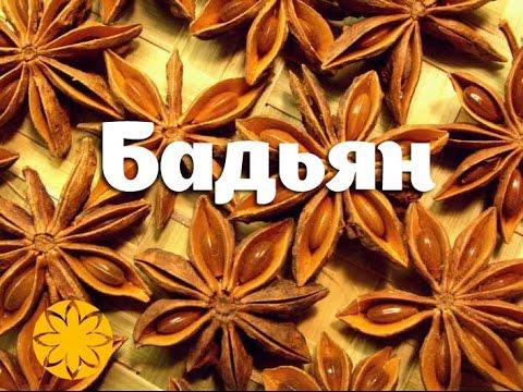 Бадьян (Анис Звездчатый, Illicium, Star Anise) Amideya.com.ua