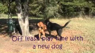 Ziggy, German Shepherd Puppy At K9 Camp - On The Ball K9 Training - Texas Dog Training
