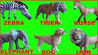 Learn Animals Names And Sounds For Kids