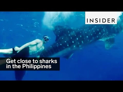 You can get up close to whale sharks in the Philippines