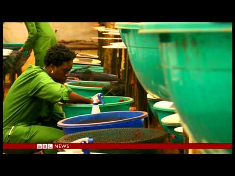 Kenya - Snail Farm