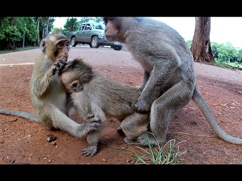 Most Amazing Monkeys Meeting With Group, Funny Monkey Meeting
