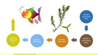 Der Stickstoffkreislauf - Die Ursache für  Probleme mit Algen, Nitrit & Nitrat im Aquarium erkennen.