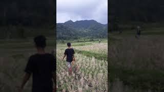 Berburu koto baru batu basa#saloki team