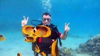 Шарм эль Шейх 2020 октябрь Отели отели Подводный мир Наама бей