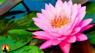 🔴 Relaxing Spa Music 24/7, Sleep Music, Stress Relief, Meditation, Healing, Yoga, Zen, Relax, Sleep
