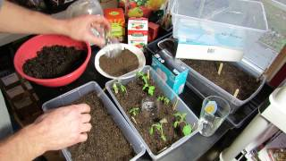 Seed Starting Tomatoes/Peppers Indoors: Setting up the Starting Mix & Tray, Planting (2 of 3)