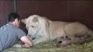 Löwe zum Kuscheln - Kevin Richardson