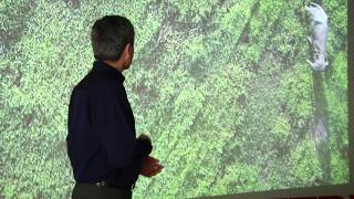 Using drones to conserve natural habitats   Professor Serge Wich   TEDxLiverpool