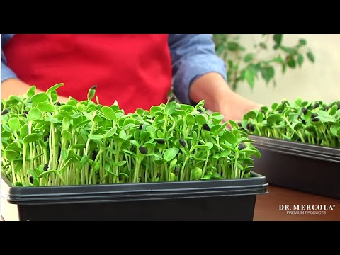 Grow Your Own Sprouts with Dr. Mercola's Sprout Doctor Starter Kit