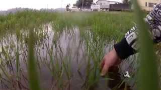 Represa Billings Pescaria de Traira - Full HD