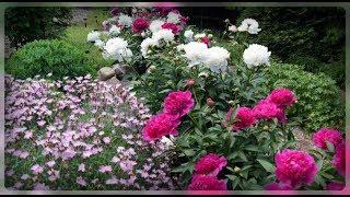 Июнь главный месяц для вашего цветника