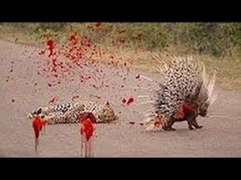 Wild Nature - The Big Five Dangerous Animals in Africa part8