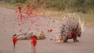 Wild Nature - The Big Five Dangerous Animals in Africa part8