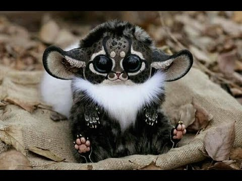 Weirdest Animals That Actually Exist!