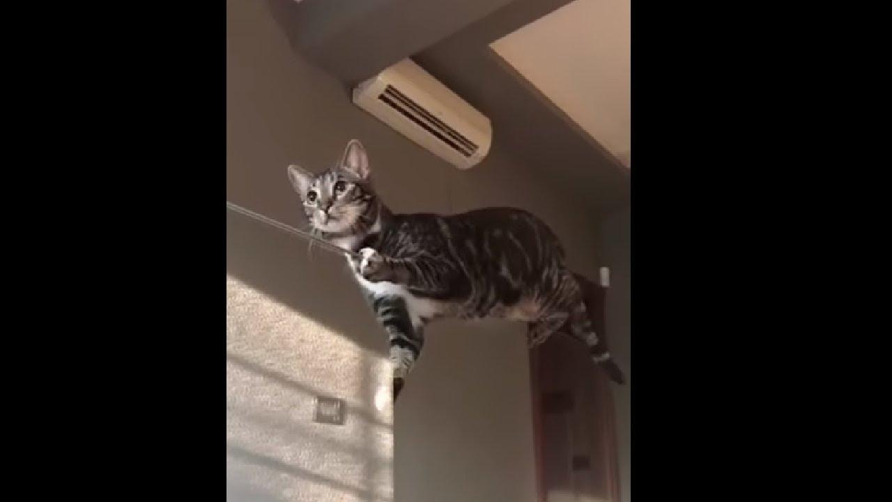 Cat Trying To Walk On Glass\u0027 Edge Like An Acrobatic