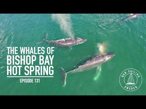 The Whales Of Bishop Bay Hot Spring - Ep. 131 RAN Sailing