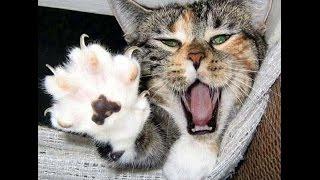 Смешные кошки 12 ● Приколы с животными лето 2014 ● Funny cats vine compilation ● Part 12
