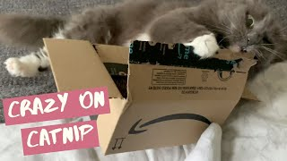 Cat Goes Crazy On Catnip | HILARIOUS Mail Time