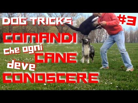 COMANDI che ogni CANE ADDESTRATO deve conoscere   DOG TRICKS #3