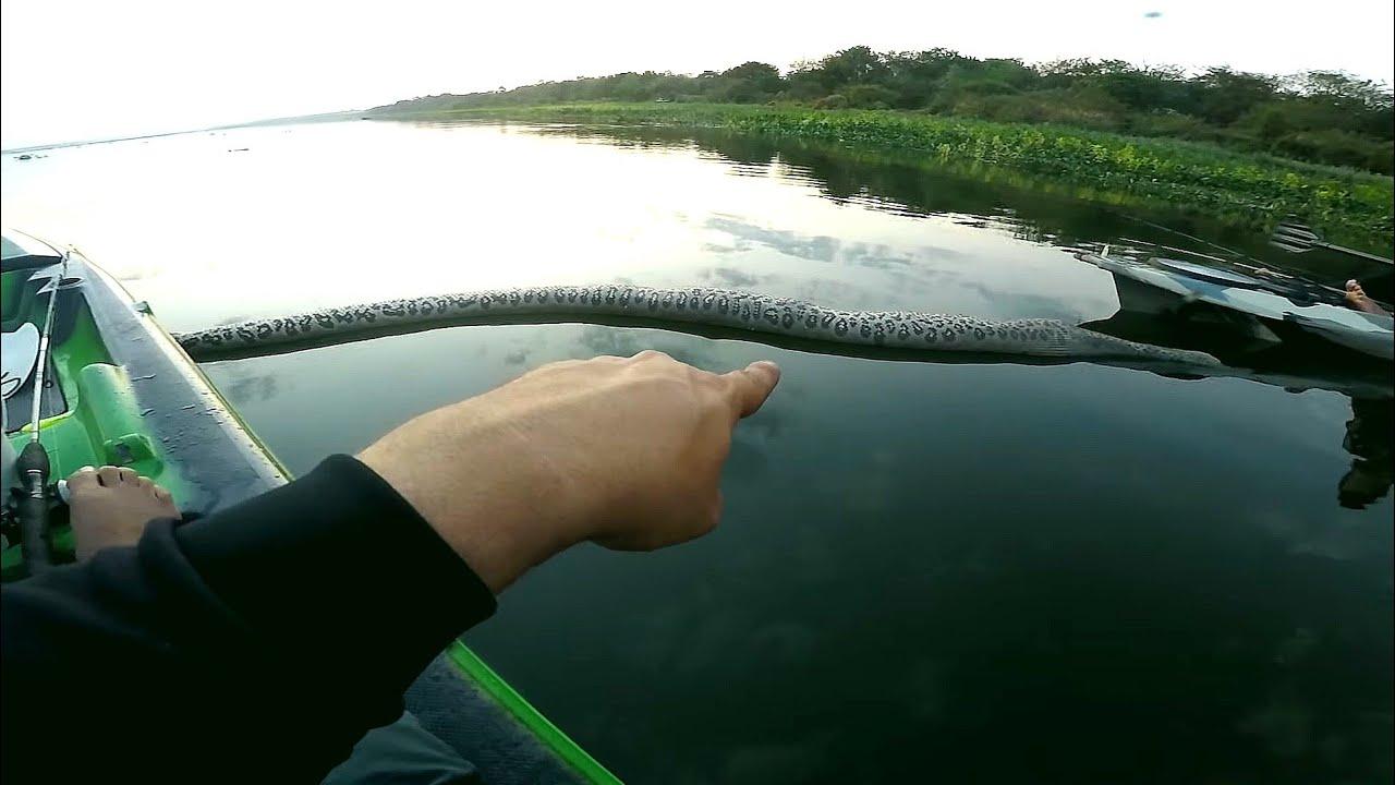 Encontro ASSUSTADOR na pescaria olha o TAMANHO !!!