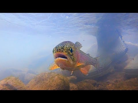 Fly Fishing For Virginia Trout - Exploring Big Stony Creek