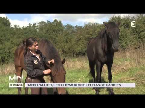 ANIMAUX : Dans l'Allier, les chevaux ont leur ange gardien