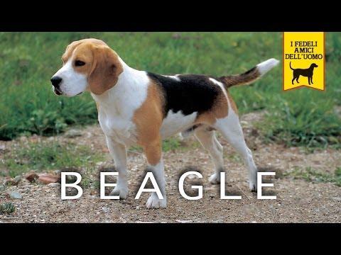IL BEAGLE trailer documentario