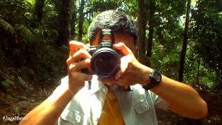 Astrid Hanya Untukmu Hutan Itu Indonesia