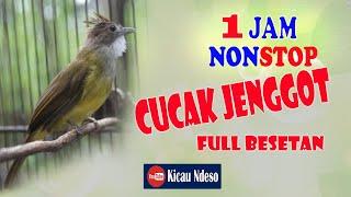 Download Lagu masteran cucak jenggot full besetan mp3