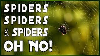 Spider Invasion After Hawaii Kilauea Volcano Eruption 2018