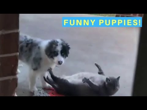 Cute and funny puppy videos