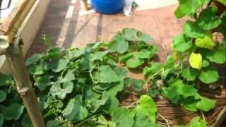 hydroponics in Mangalore