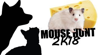 CAT GAMES MOUSE HUNT 2K18 FOR CATS ONLY
