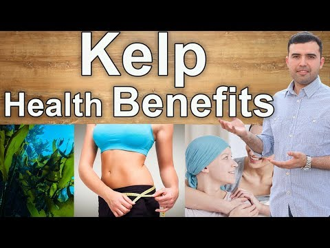 Amazing Benefits of Kelp – Interesting Advantages of Consuming Kelp for Your Health