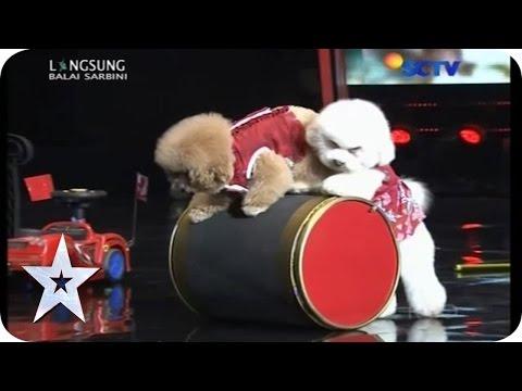 Machi & Snowy got a new buddy! - Cute Dog Got Talent - GRAND FINAL - Indonesia's Got Talent