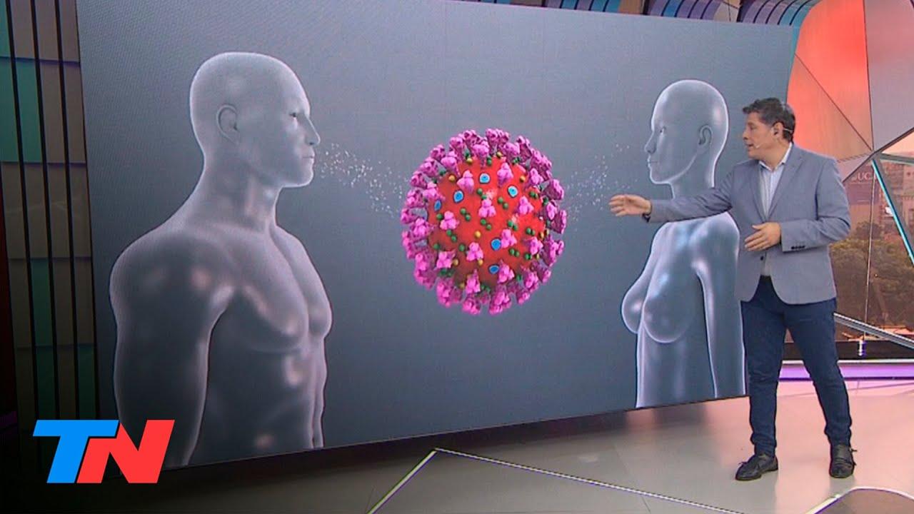 CORONAVIRUS: Cómo es el COVID-19 por dentro, cómo opera en el cuerpo humano y cómo se transmite