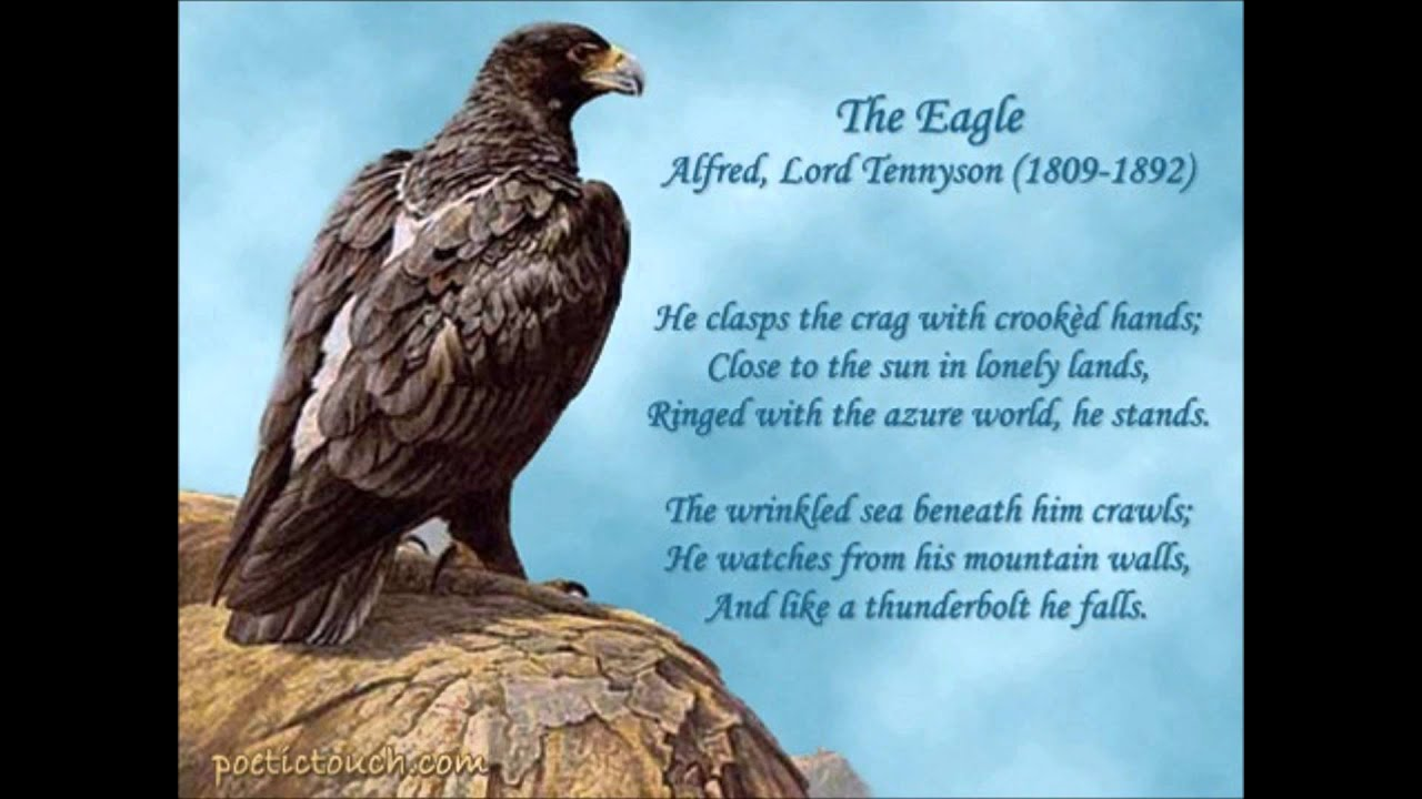 Image result for the eagle tennyson