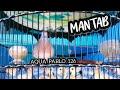 Mantab Suara Lengkap Perkutut Betina Ring Aqua Bird Farm  Mp3 - Mp4 Download