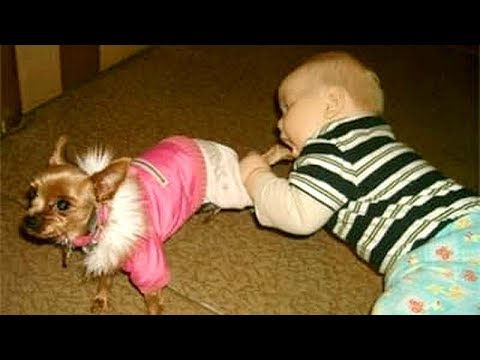 Wanna SCREAM WITH LAUGHTER? - Funny KIDS vs PETS VIDEOS will take care of this!