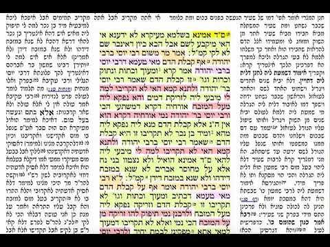 הדף היומי מסכת תמורה דף ז Daf yomi Temurah daf 7