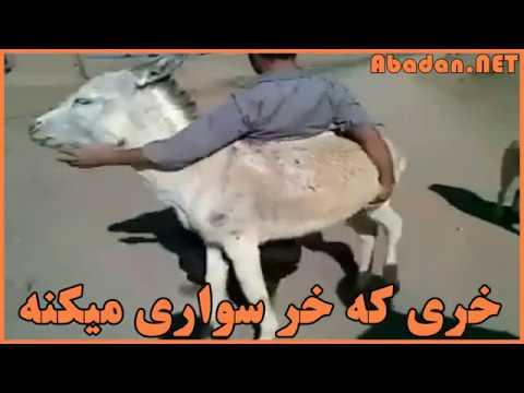 خری که خر سواری میکنه  :) thumbnail