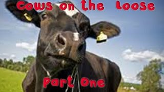 Cows on the Loose | Part One | The Early Days | Gratass | Little Grey Fergie