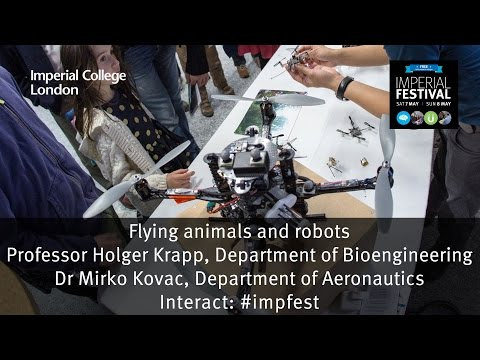 Flying animals and robots