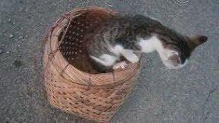 うちの猫たちの、おもしろ動画10  Japanese Funny Cats Video 10【いなか猫1966】japanese Funny Cat