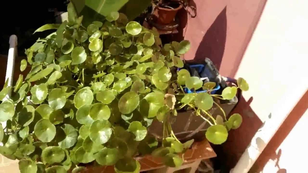 Filtro de pantano en recipiente con sustrato para estanque - Estanque para tortugas ...
