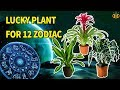Perfect Plant bring Good Luck & Prosperity for 12 Zodiac Signs - Know Everything